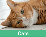 Button image linking to Cat Products showing a ginger cat