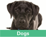 Button linking to the products for dogs showing a black labrador