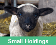 Button image linking to Small Holding Products showing a lamb
