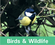 Button image linking to Bird & Wildlife Products showing a great tit