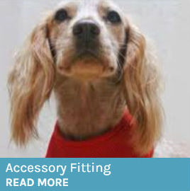 Image of a dog wearing a harness as button to link to the Accessory Fitting page