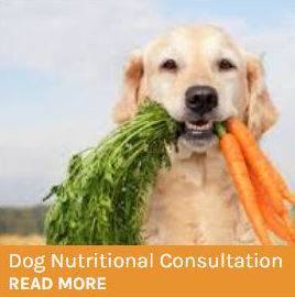 Dog Nutrition Consultation button showing a golden retrieved with a bunch of carrots in its mouth