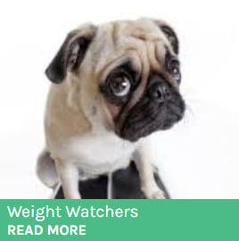 Dog Weight Watchers button showing a dog sitting scales.